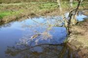 River Lymington at Boldre