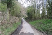 Wooded Lane by Minton