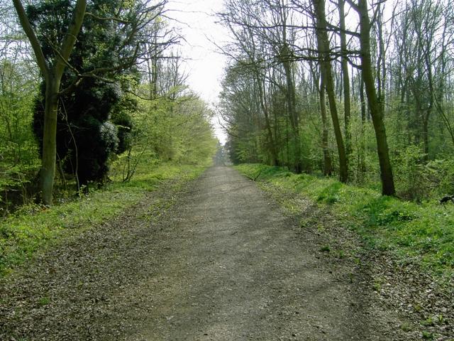 Entering Chicksands Wood From Appley Corner