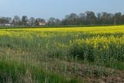 Farmland near Wistow