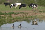 Farmland near Kilby Bridge