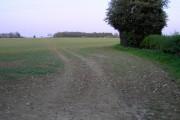 Field Opposite Great Plummers Farm