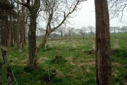 Woodland and hedge replanting at Westlinbank