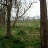 Woodland and hedge replanting at Westlinbank
