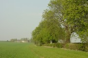 Chestnut trees and Rough Park