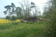 Wood South of Westbrook Farm on footpath