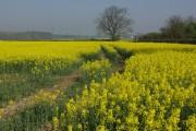 Farmland near Little Walton