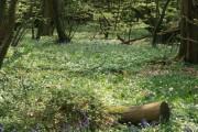 Hoad's Wood, Etchden Road
