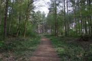 Path through Harmergreen Wood