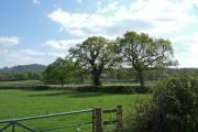 Farmland near Melbury Osmund