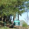 Llwynypia Forest