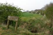 The Edge of Tinkler's Moor Plantation