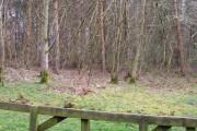 Brierley Wood