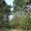 Woodland, near Quatford, Shropshire