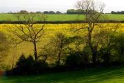 Farmland near Nicholaston Farm