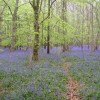 Path, through Webb's Wood