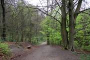 Path through the Limb Valley