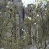 Compton Castle with magnolia