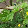Beetles eating Alder