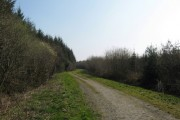 Forest track at Powler's Piece