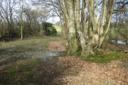 Weston's Wood