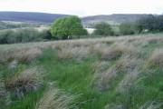 Moorland, south of Penygraig