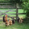 """""""Now, Girls. Just here  I stood on the gate and I said to him....."""""""