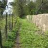 Wall at Mainsforth