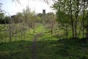 Wybunbury Church Tower from Edge of the Moss
