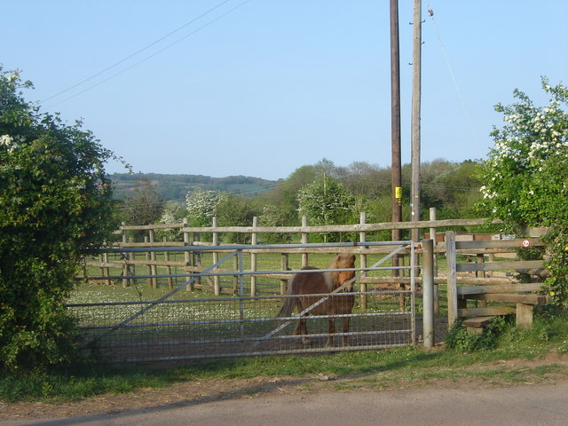 Footpath, fences, and friend