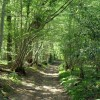 Path in Marline Wood