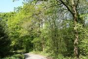 Chulmleigh: in Longmoor Wood
