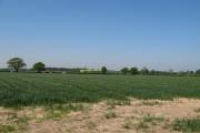 Field of Corn.
