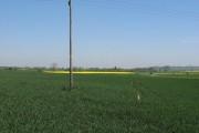 Field of Yellow.