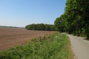 Lane through the Woodland.