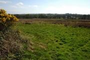 Speccott Moor, near Winswell
