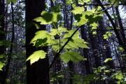 Sun Shines Through In Hugset Woods
