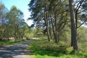 The Woods At Craigengillan