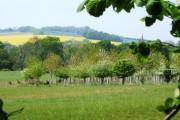 View to Lockerley