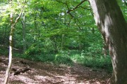 Deciduous Woods, Quatford, Shropshire