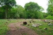 Logging, Pett Wood