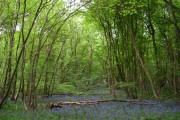 Rodger's Wood