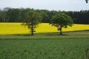 Farmland near Cadbury Farm
