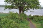 Drowned road at Roadford Lake