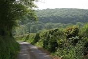 Landlake Wood