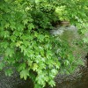 Yealmpton: the river Yealm