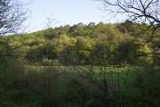 Raddon Wood