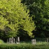 Crosses at Lewtrenchard