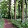 Junction in Broughton West Wood
