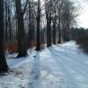 Broughton West Wood in winter